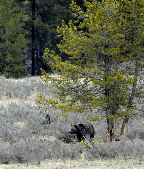 https://wizjalokalna.files.wordpress.com/2010/06/grizzly-and-cub.jpg