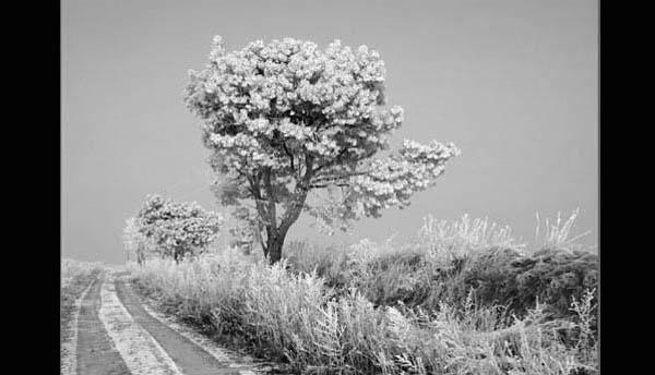 https://wizjalokalna.files.wordpress.com/2011/11/polna-droga-i-drzewo.jpg?w=780