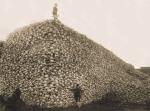czaszki bizonów
