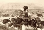 Hunting buffalo bytrains