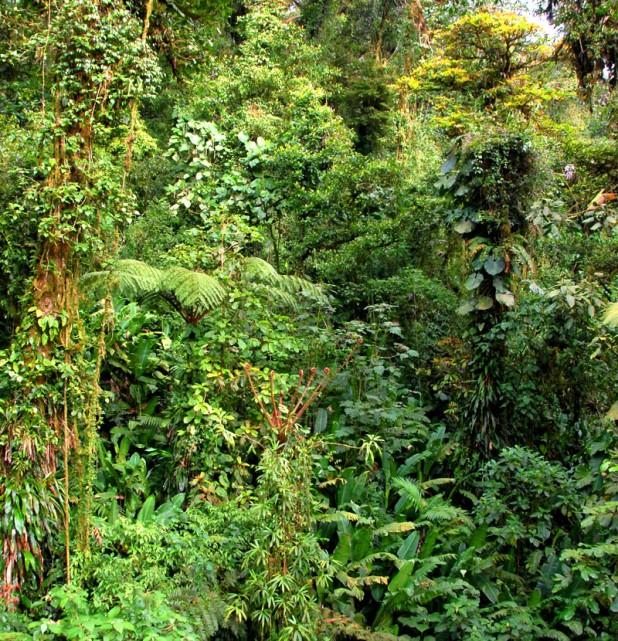 Dzungla - Monteverde (Kostaryka)