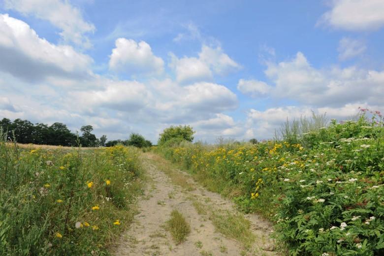 polna droga na Podkarpaciu (zdjęcie własne)