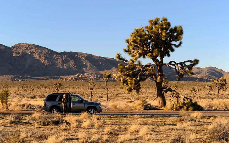 Zbliżenia z niezwykłością: krótki odpoczynek przy drodze - w Parku narodowym Drzewek Jozuego w Kalifornii.