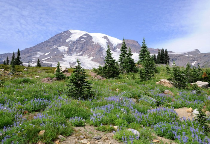 Park Narodowy Mt. Rainier (2)
