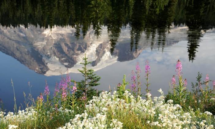 Park Narodowy Mt. Rainier (4)