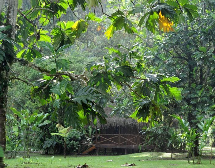 Pacuare Lodge otoczona dżunglą