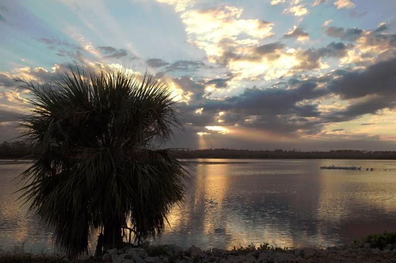 Zmierzch nad mokradłami - Everglades