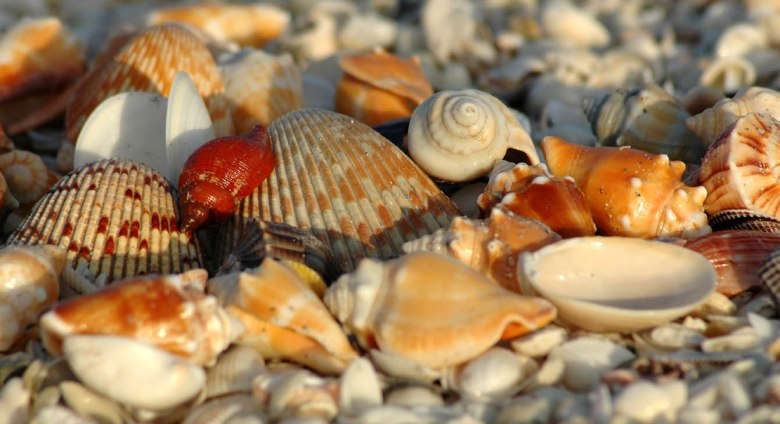 Muszle na plaży - Sanibel Island