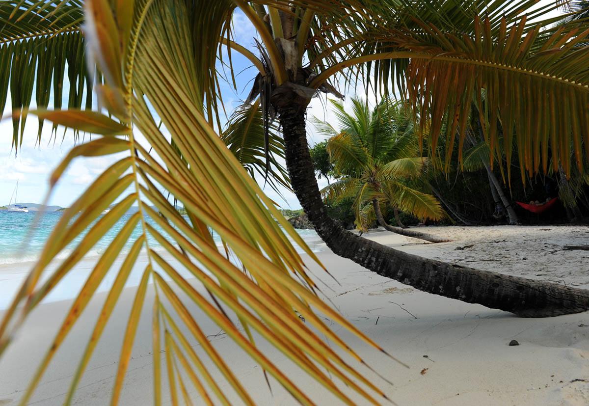 Salmon Beach - Virgin Islands NP (St. John)