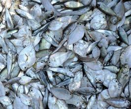 wioska rybacka - Birma (2)
