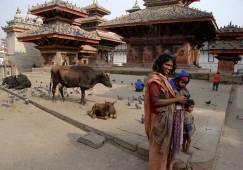Matka z dziećmi w otoczeniu bydlątek - na jednym z historycznych placów Katmandu (NEPAL)