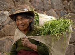 Dżwigając płachtę z trawą (PERU)