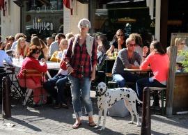 Z dalmatyńczykiem w Amsterdamie (HOLANDIA)