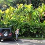 Kauai (Hawaje)