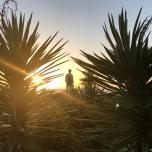 Treasure Island (Floryda)