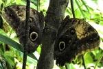 Aruba – motyle – fot. Stanisław Błaszczyna(1)