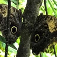Aruba - motyle - fot. Stanisław Błaszczyna (1)