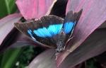 Aruba – motyle – fot. Stanisław Błaszczyna(12)