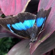 Aruba - motyle - fot. Stanisław Błaszczyna (12)