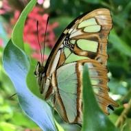 Aruba - motyle - fot. Stanisław Błaszczyna (13)