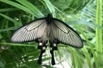 Aruba – motyle – fot. Stanisław Błaszczyna(15)
