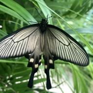 Aruba - motyle - fot. Stanisław Błaszczyna (15)