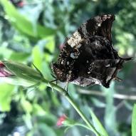 Aruba - motyle - fot. Stanisław Błaszczyna (2)