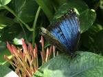 Aruba – motyle – fot. Stanisław Błaszczyna(3)