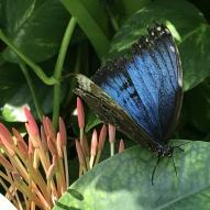 Aruba - motyle - fot. Stanisław Błaszczyna (3)