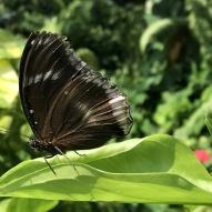 Aruba - motyle - fot. Stanisław Błaszczyna (4)