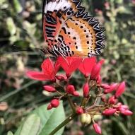 Aruba - motyle - fot. Stanisław Błaszczyna (5)