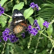 Aruba - motyle - fot. Stanisław Błaszczyna (8)