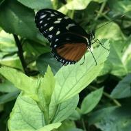 Aruba - motyle - fot. Stanisław Błaszczyna (9)