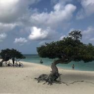 Divi divi tree - Aruba - fot Stanisław Błaszczyna (1)
