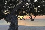 Divi divi tree – Aruba – fot Stanisław Błaszczyna(12)