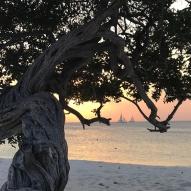 Divi divi tree - Aruba - fot Stanisław Błaszczyna (12)