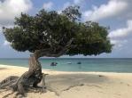 Divi divi tree – Aruba – fot Stanisław Błaszczyna(3)