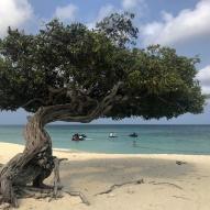Divi divi tree - Aruba - fot Stanisław Błaszczyna (3)