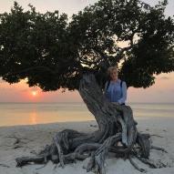 Divi divi tree - Aruba - fot Stanisław Błaszczyna (6)