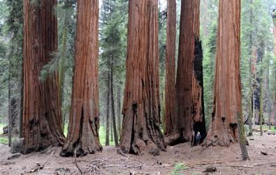 Sequoia NP (Kalifornia)