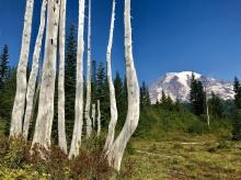 Mount Rainier NP, fot. Stanisław Błaszczyna (27)