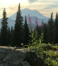 Mount Rainier NP, fot. Stanisław Błaszczyna (33)